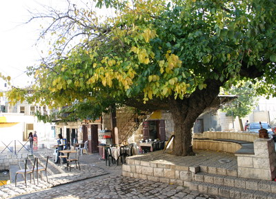 Pqiin Tree in town center, Israel